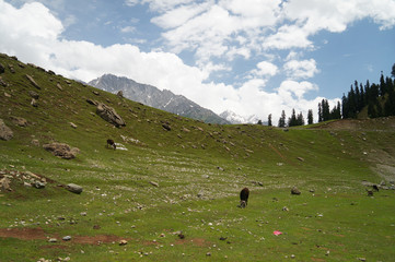 Beautiful view of  hill and mountain in Sonamarg,India