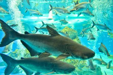 Poster Submarine Closeup of beautiful Sea Fish In fish tank