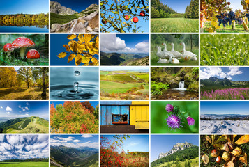 Collage of nature photos