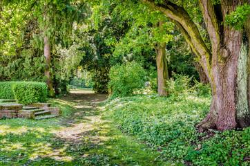 Drzewo w parku, Zámek Opočno