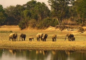 Wall Mural - Herd of Elephantd