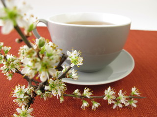 Schlehenblüten Tee