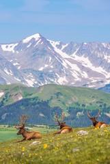 Wall Mural - Summer Meadow with Elks