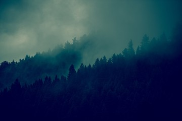Foggy Forest Background