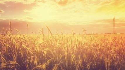 Goldenes Sommerfeld