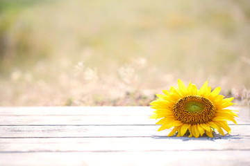 Beautiful sunflower on table on bright background