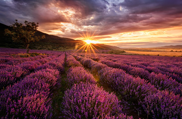 Photo sur cadre textile Grenat Stunning landscape with lavender field at sunrise