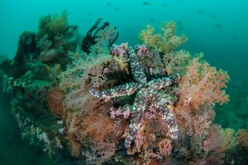 Sea Star and Soft Corals