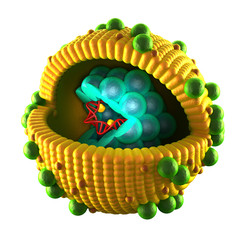 Hepatitis Virus Cell - isolated on black