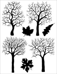 Silhouettes of trees and leaves