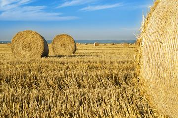 Wheat roll bales at field, sunrise scene
