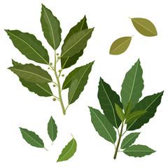 twig fresh bay leaf herb isolated set