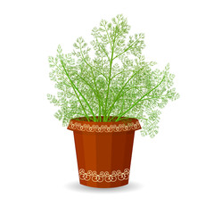 dill in a flower pot