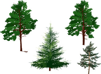 four evergreen trees isolated on white