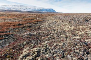 Garden Poster Arctic Arctic landscape in summer