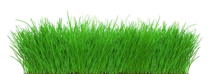 Gras Panorama freigestellt