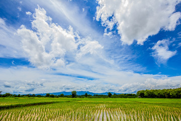 blue sky and cloud with rice field below, thailand