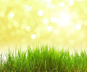 Gras und Bokeh