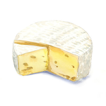 watercolor cheese brie on a white background
