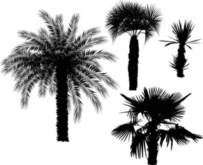 four palm trees isolated on white