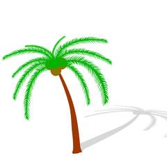 palm tree illustration vector on white