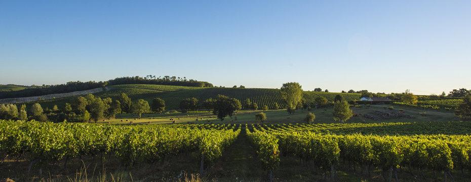 Vineyard south west of France, Bordeaux Vineyards, Saint-Emilion