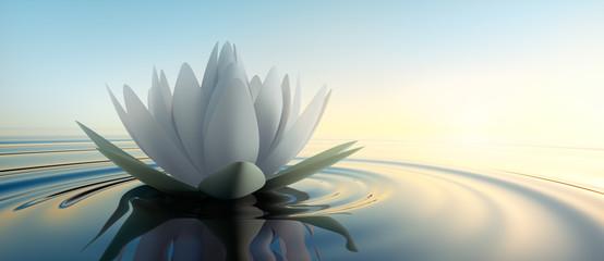 Lotusblüte im See Fototapete