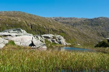 Fototapete - Norwegian landscape