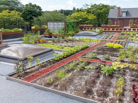 Green Roof in urban setting