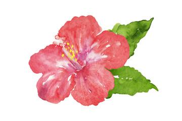 赤いハイビスカスの花 水彩イラスト