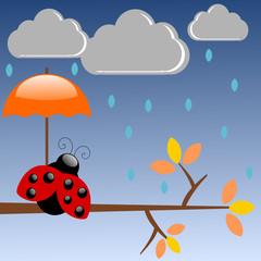 Coccinella sotto la pioggia