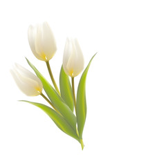Three white tulips on a card.