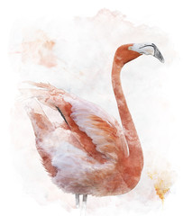 Watercolor Image Of  Flamingo Bird