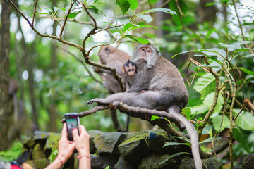 Tourist taking picture of monkey family
