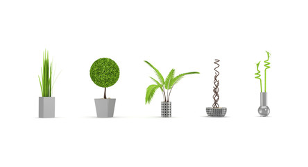 Decorative plants isolated on white.
