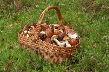 Mushrooming, wicker basket full of mushrooms