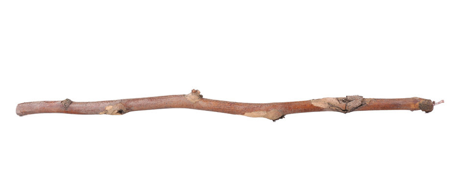 Dry tree branch isolated on white