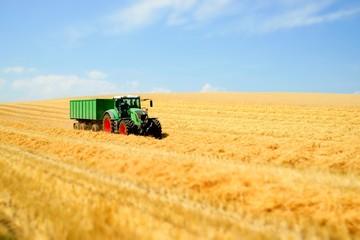 Getreideernte, Abtransport mit Schlepper und Anhänger Fotoväggar