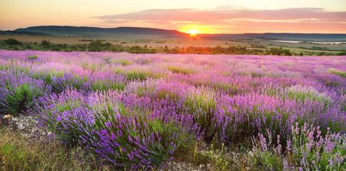 Foto op Canvas Zonsondergang Meadow of lavender.
