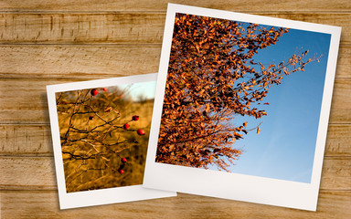 Polaroid photo of Autumn Landscape and rosehips.