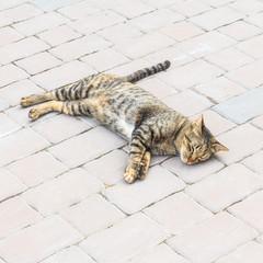 Cute cat sleep.