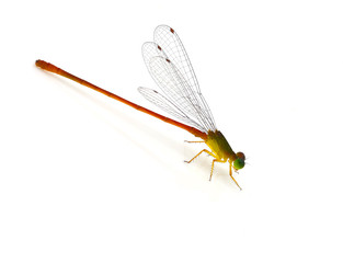 Dragonfly pin.