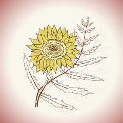 Vintage Sunflower illustration vector art