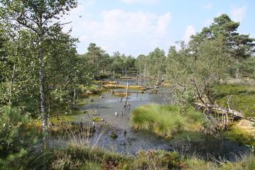 Landschaftsschutzgebiet Pietzmoor in der Lüneburger Heide