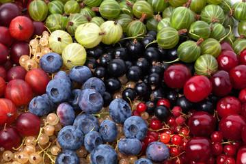 Spoed Foto op Canvas Olijfboom Berries