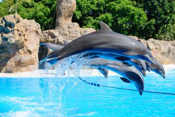 Photo sur Aluminium Dauphins Dolphins