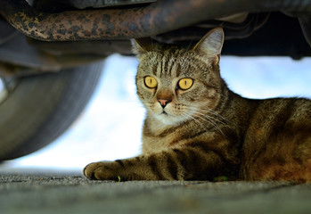 Garden cat - under the car