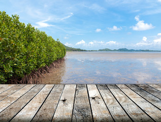 Mangrove forest in the tropical place with wood floor