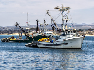 Fishing vessels in Monterey harbor, California