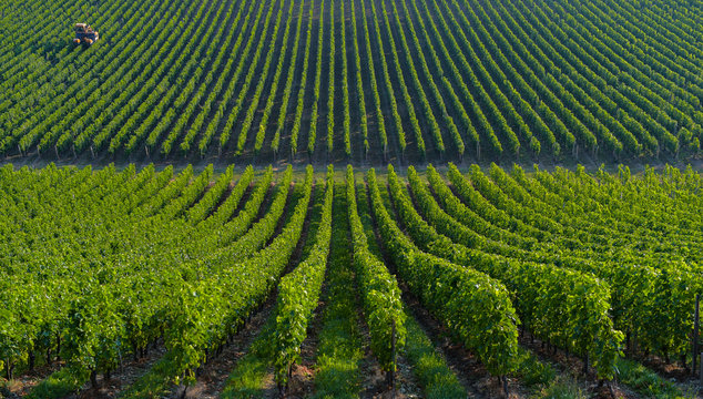 Agricultural machine in the vineyards-Landscape-Vineyard south w